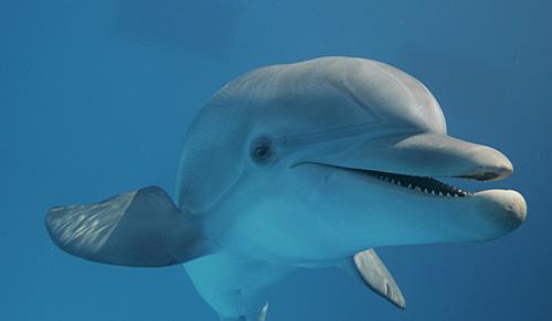 Prosthetic_dolphin_03
